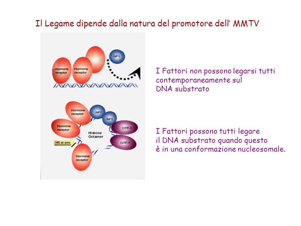 Il Legame dipende dalla natura del promotore dell' MMTV