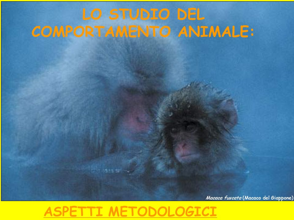 LO STUDIO DEL COMPORTAMENTO ANIMALE: