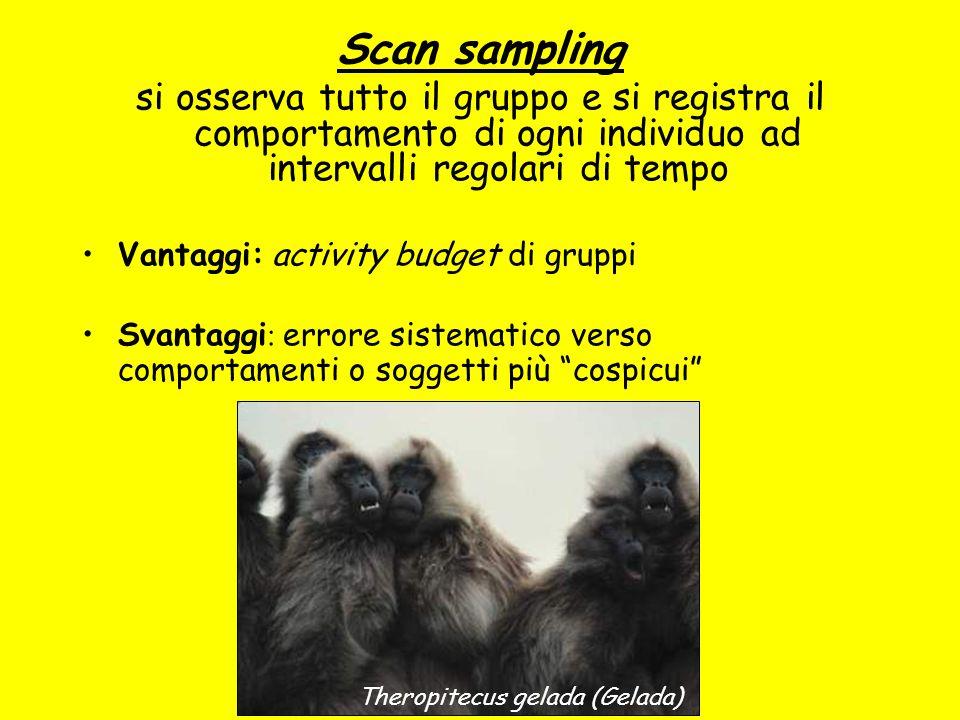 Scan sampling si osserva tutto il gruppo e si registra il comportamento di ogni individuo ad intervalli regolari di tempo.