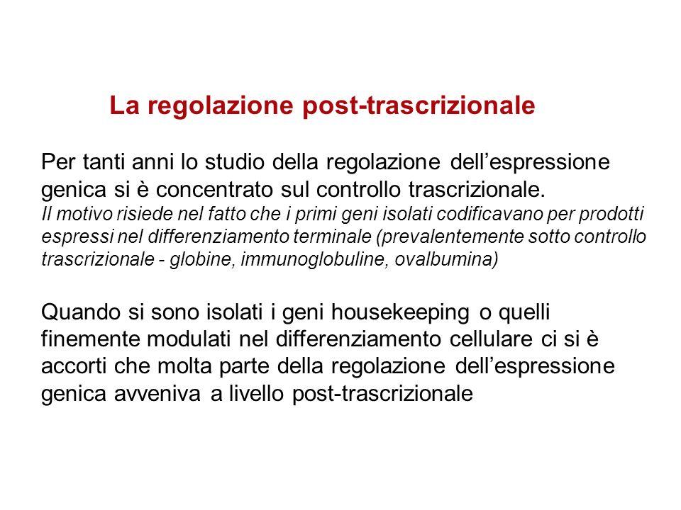 La regolazione post-trascrizionale