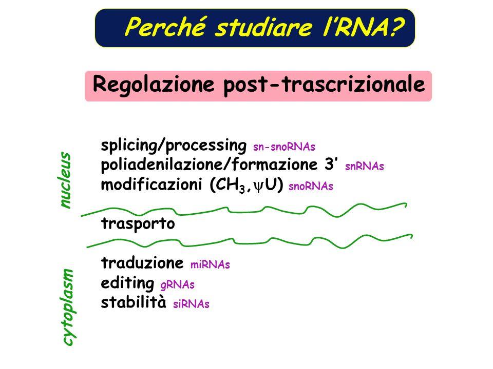 Perché studiare l'RNA Regolazione post-trascrizionale