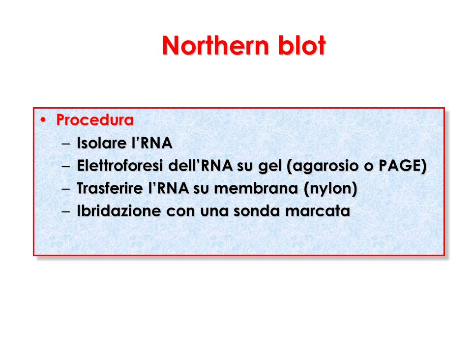 Northern blot Procedura Isolare l'RNA