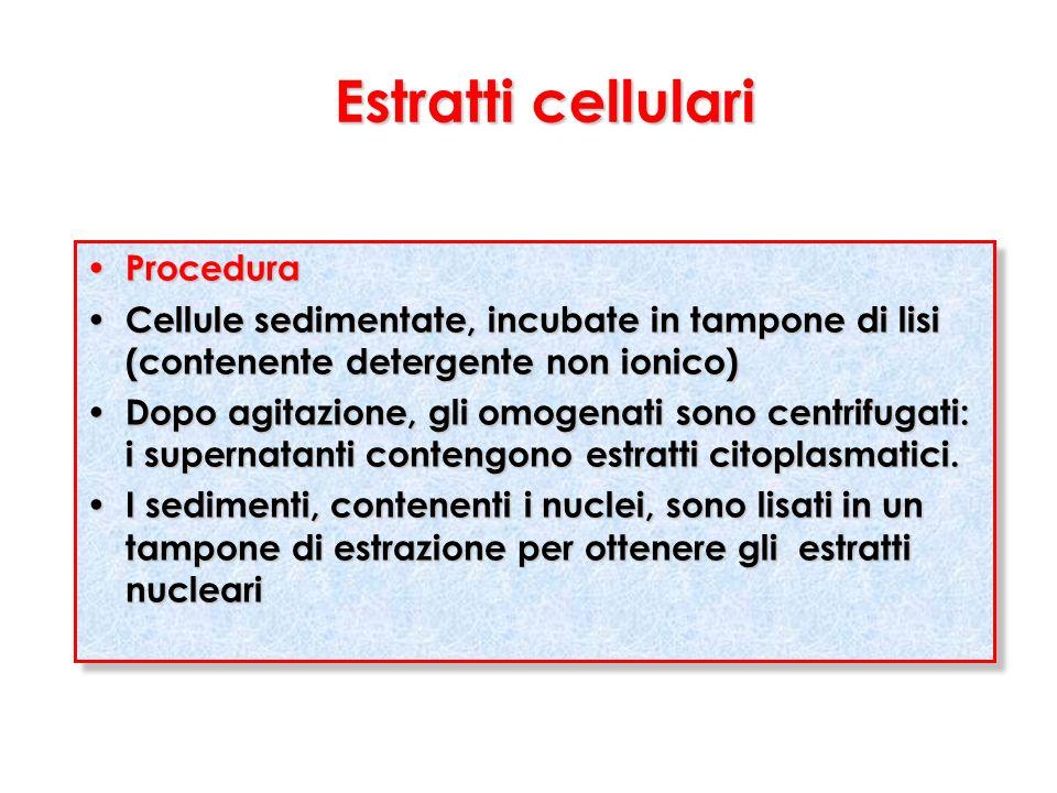 Estratti cellulari Procedura