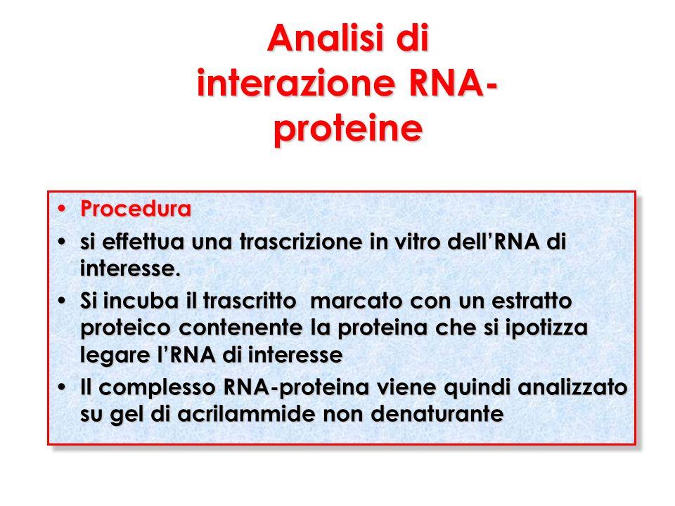 Analisi di interazione RNA-proteine