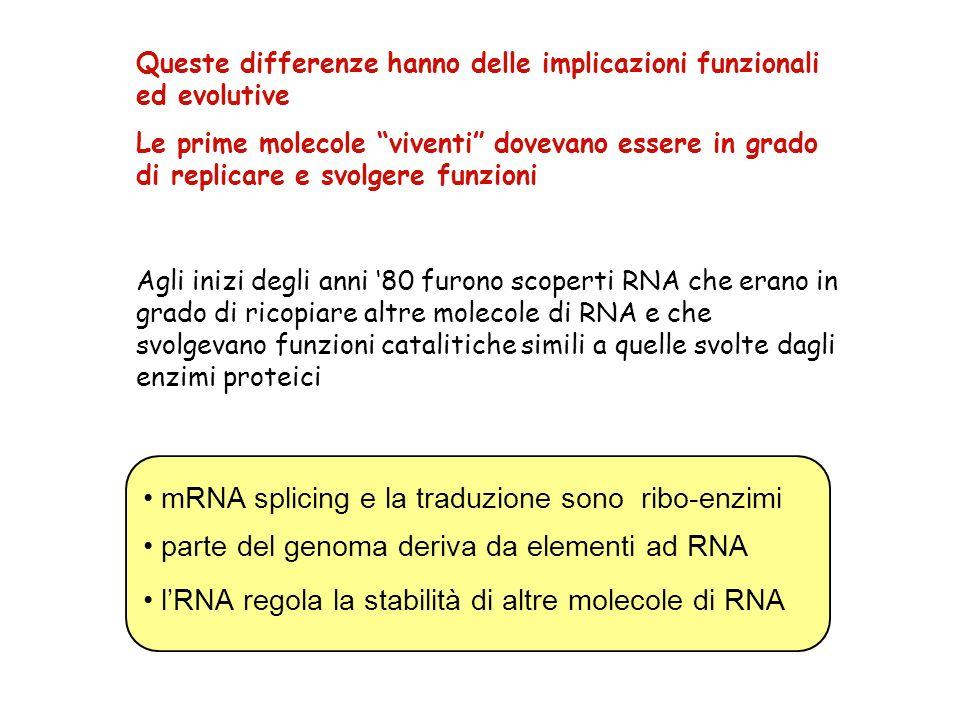 • mRNA splicing e la traduzione sono ribo-enzimi