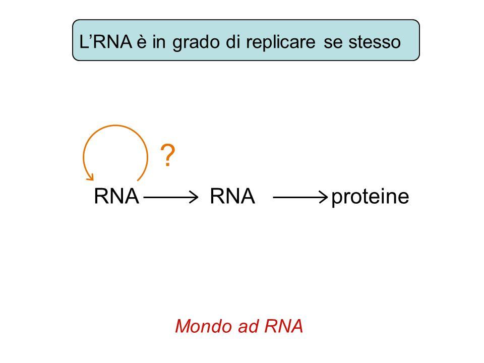 L'RNA è in grado di replicare se stesso