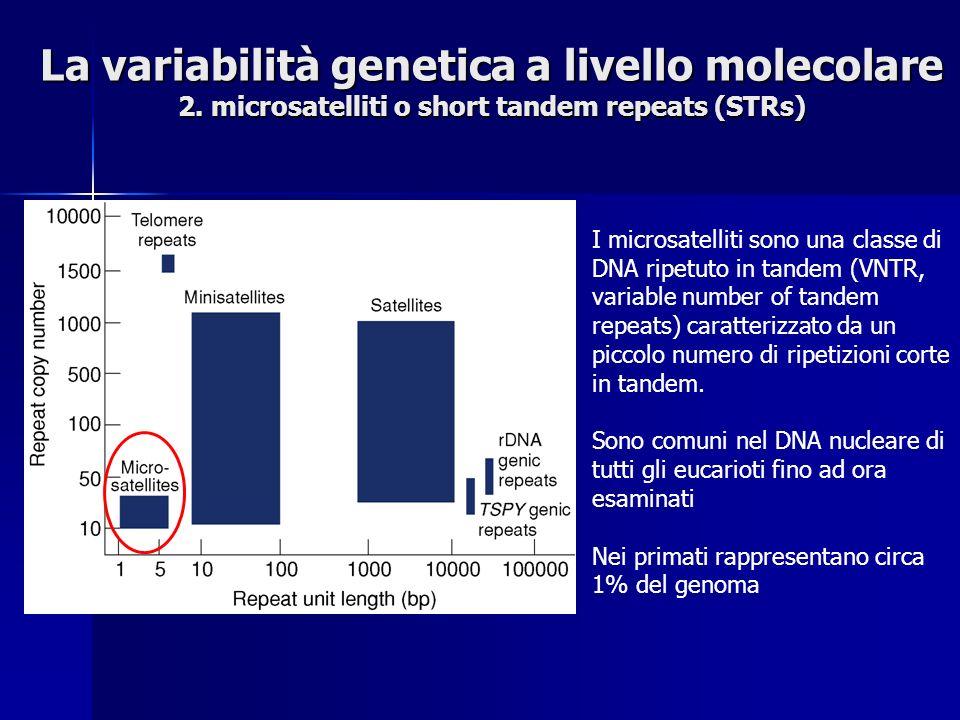 La variabilità genetica a livello molecolare 2