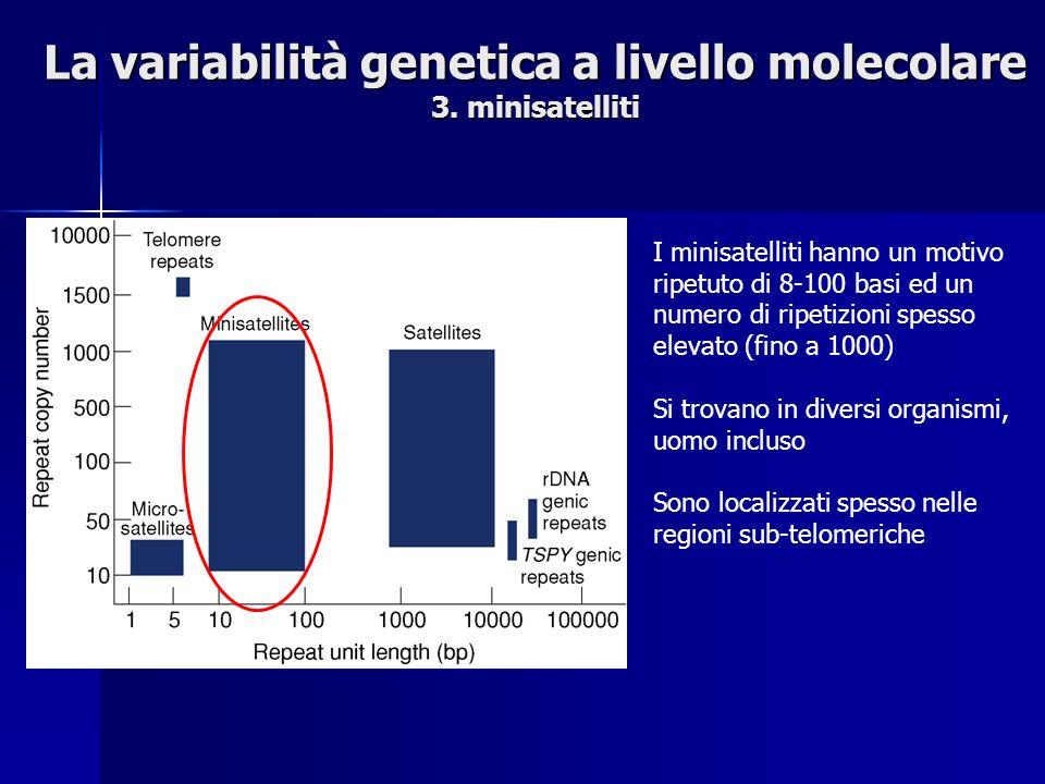La variabilità genetica a livello molecolare 3. minisatelliti