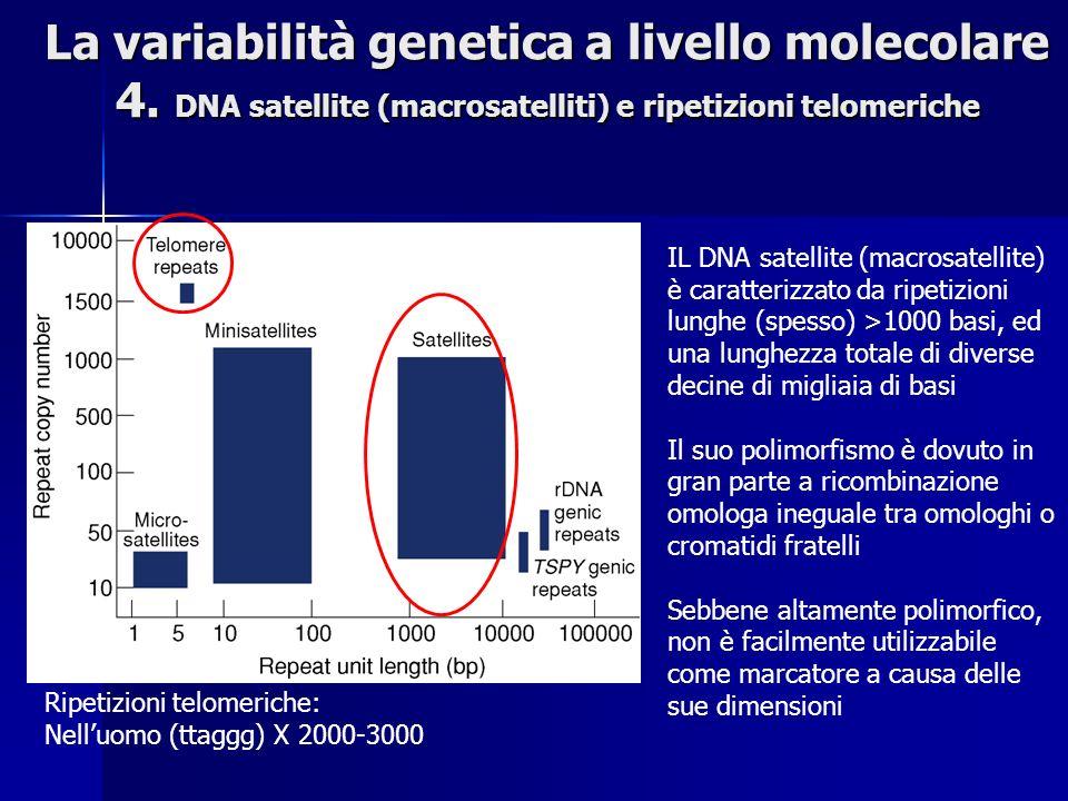 La variabilità genetica a livello molecolare 4