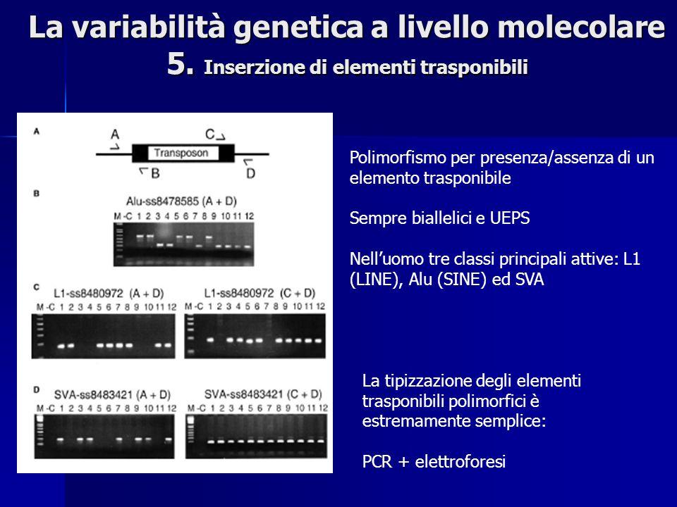 La variabilità genetica a livello molecolare 5