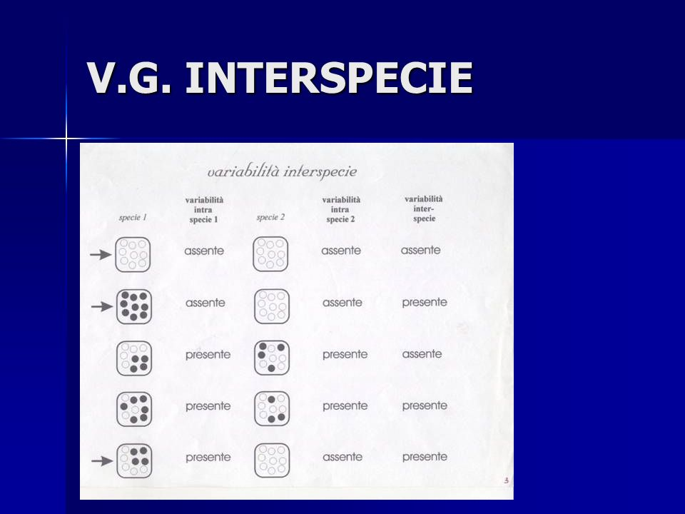 V.G. INTERSPECIE
