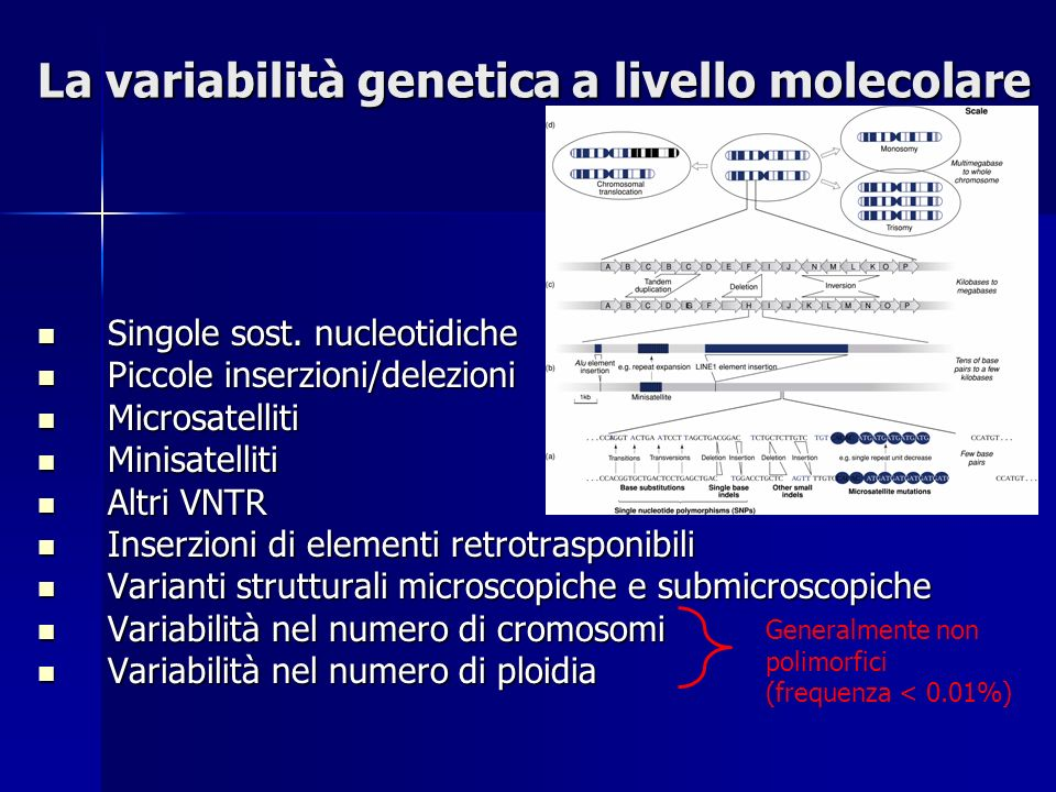 La variabilità genetica a livello molecolare