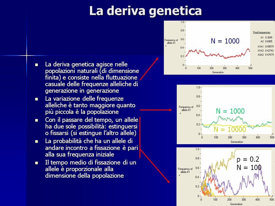 La deriva genetica N = 1000 N = 1000 N = 10000 p = 0.2 N = 100
