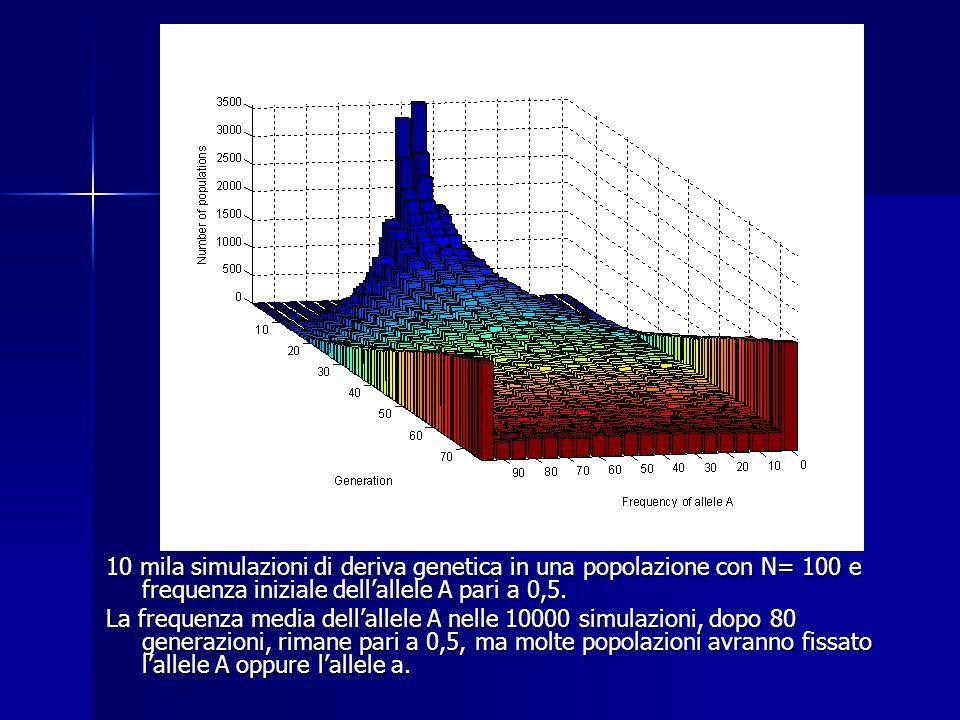 10 mila simulazioni di deriva genetica in una popolazione con N= 100 e frequenza iniziale dell'allele A pari a 0,5.