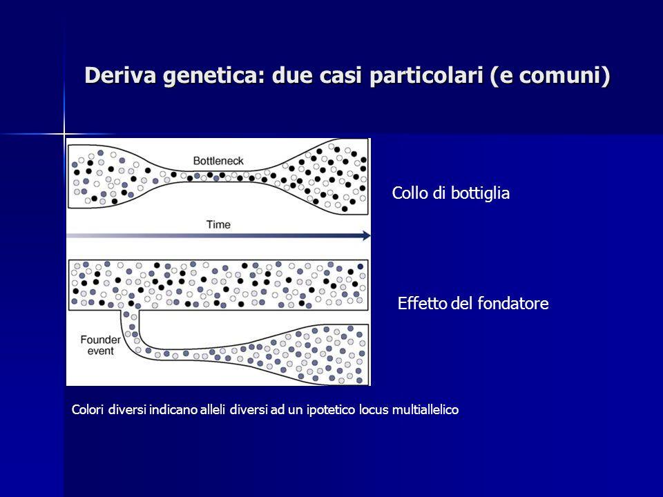 Deriva genetica: due casi particolari (e comuni)