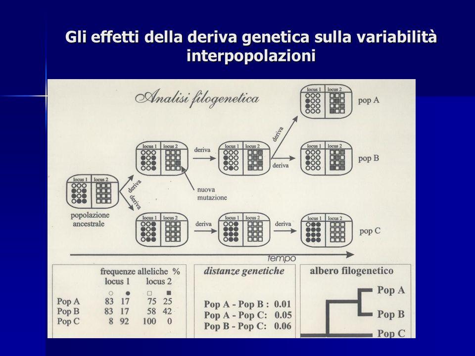 Gli effetti della deriva genetica sulla variabilità interpopolazioni