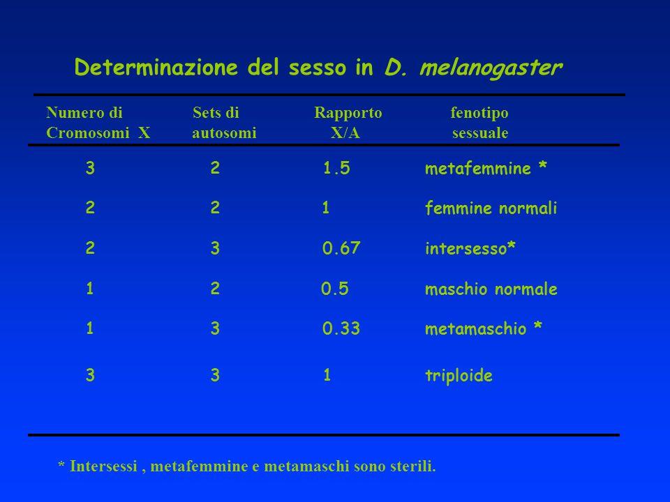 Determinazione del sesso in D. melanogaster