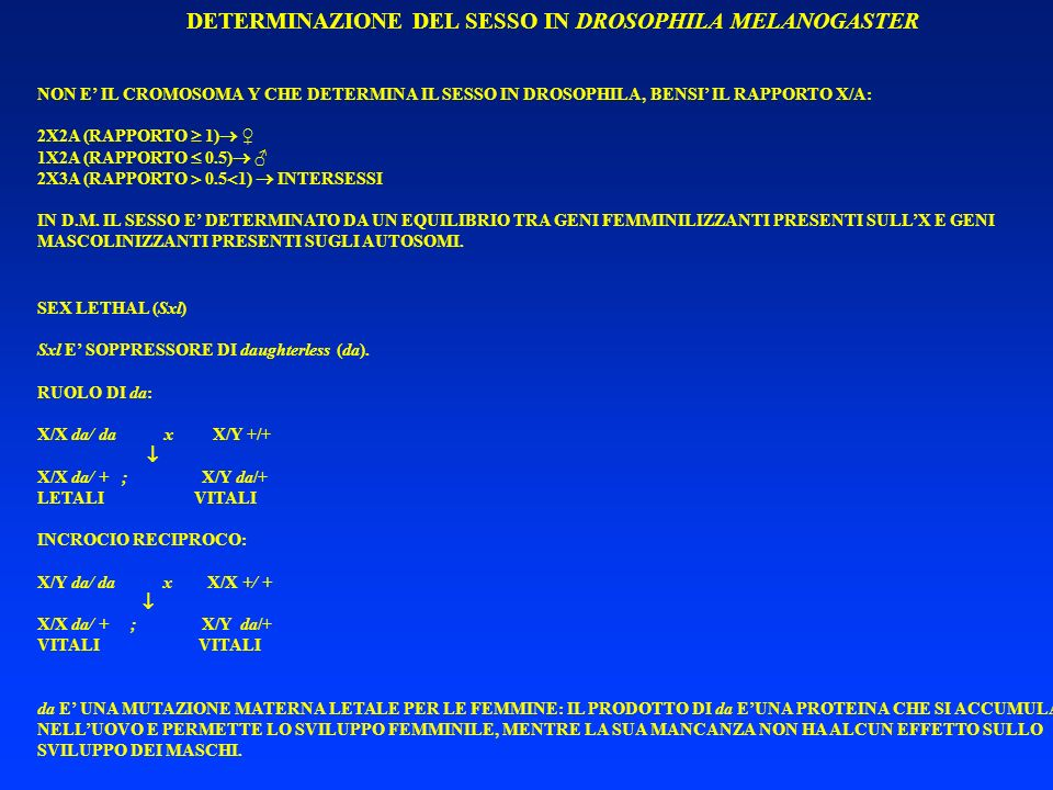 DETERMINAZIONE DEL SESSO IN DROSOPHILA MELANOGASTER