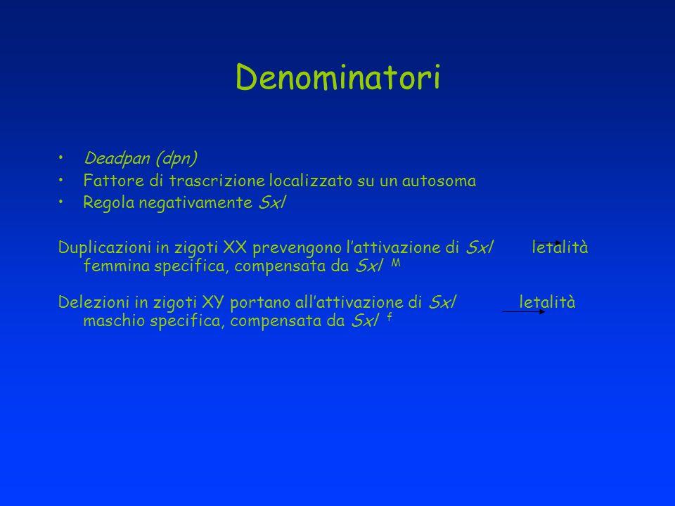 Denominatori Deadpan (dpn)
