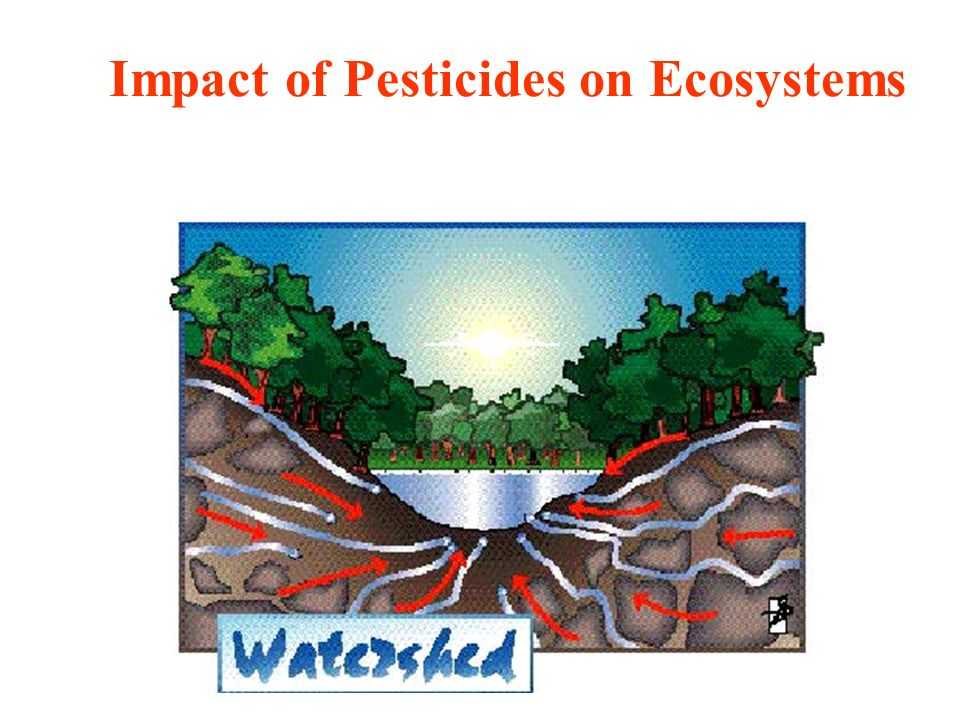 Impact of Pesticides on Ecosystems