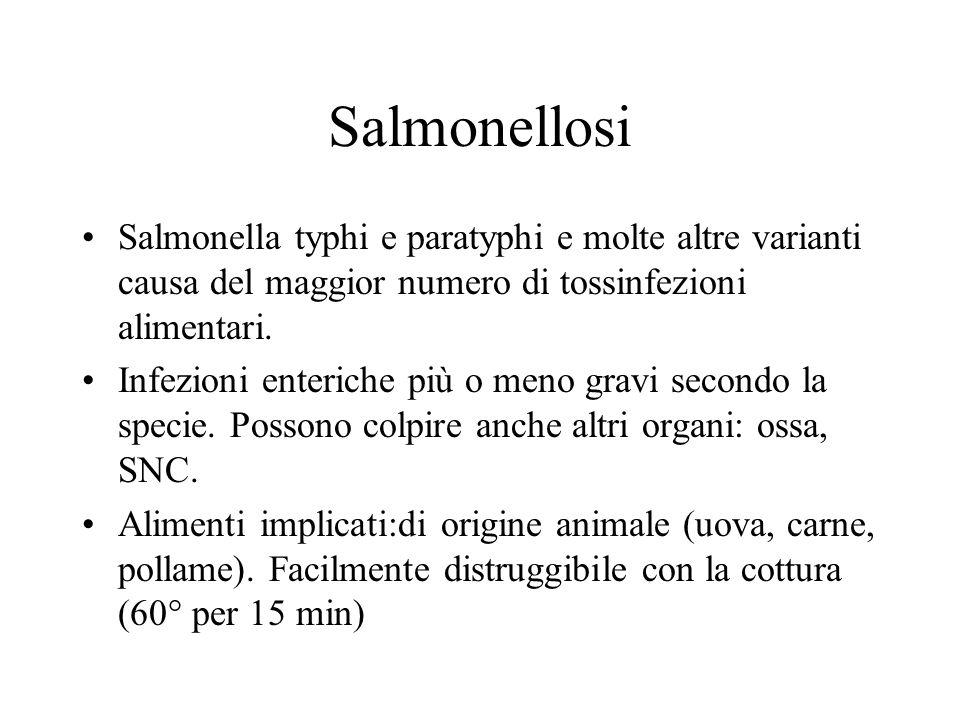 Salmonellosi Salmonella typhi e paratyphi e molte altre varianti causa del maggior numero di tossinfezioni alimentari.