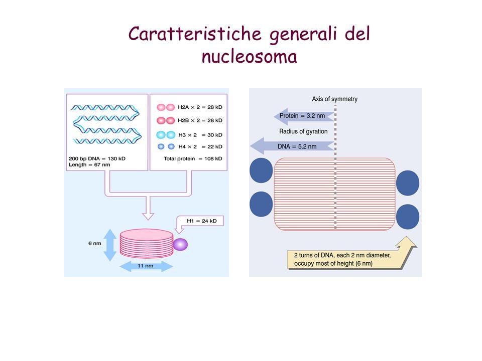 Caratteristiche generali del nucleosoma