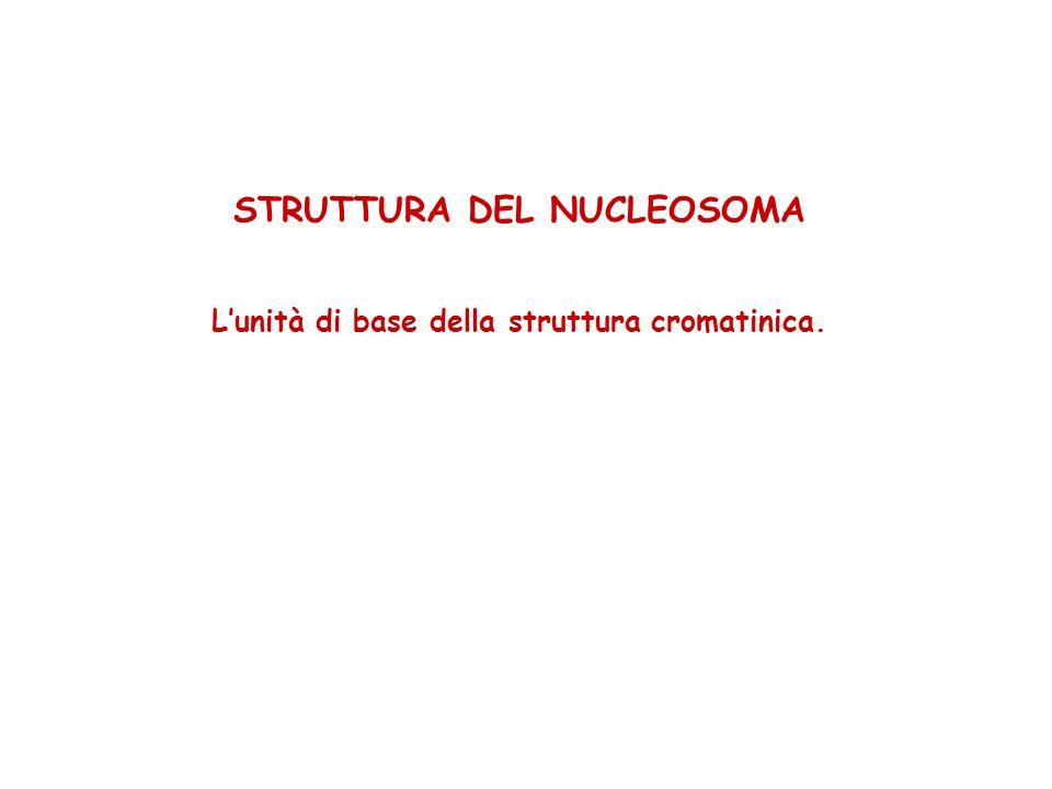 STRUTTURA DEL NUCLEOSOMA