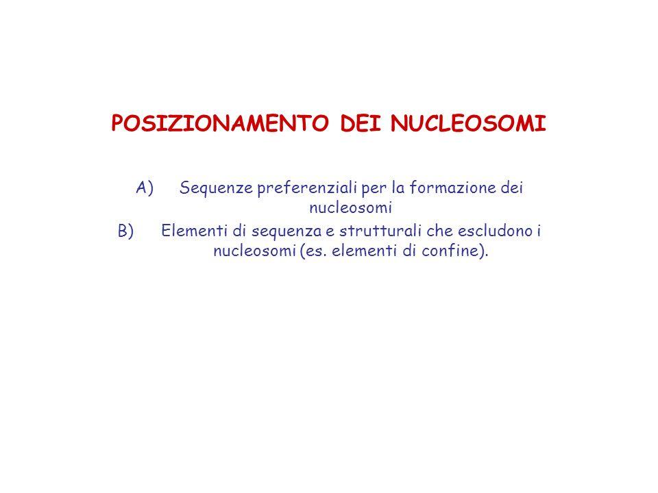 POSIZIONAMENTO DEI NUCLEOSOMI