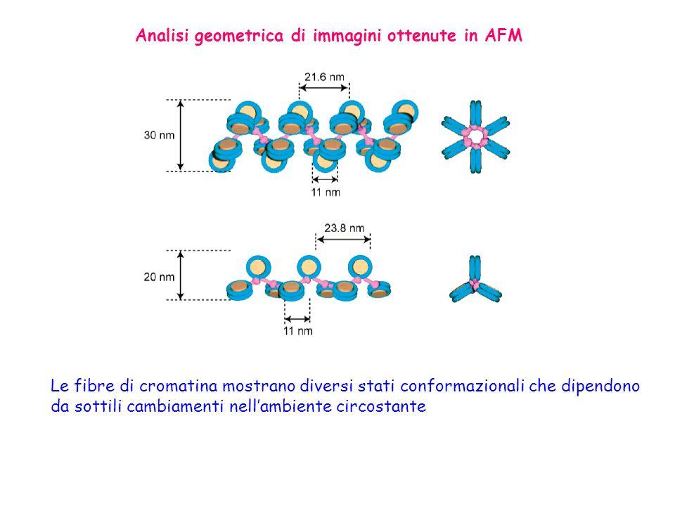 Analisi geometrica di immagini ottenute in AFM