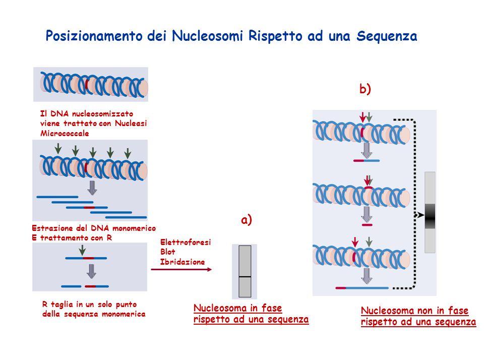Posizionamento dei Nucleosomi Rispetto ad una Sequenza