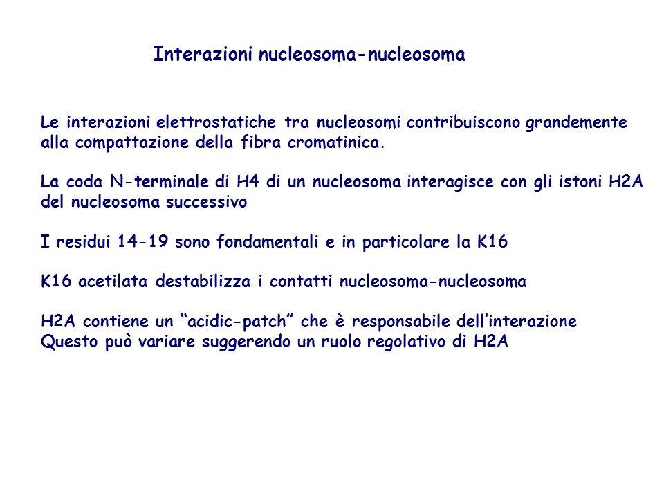 Interazioni nucleosoma-nucleosoma