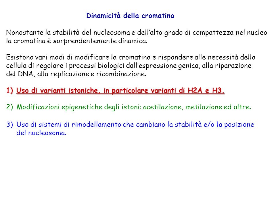 Dinamicità della cromatina