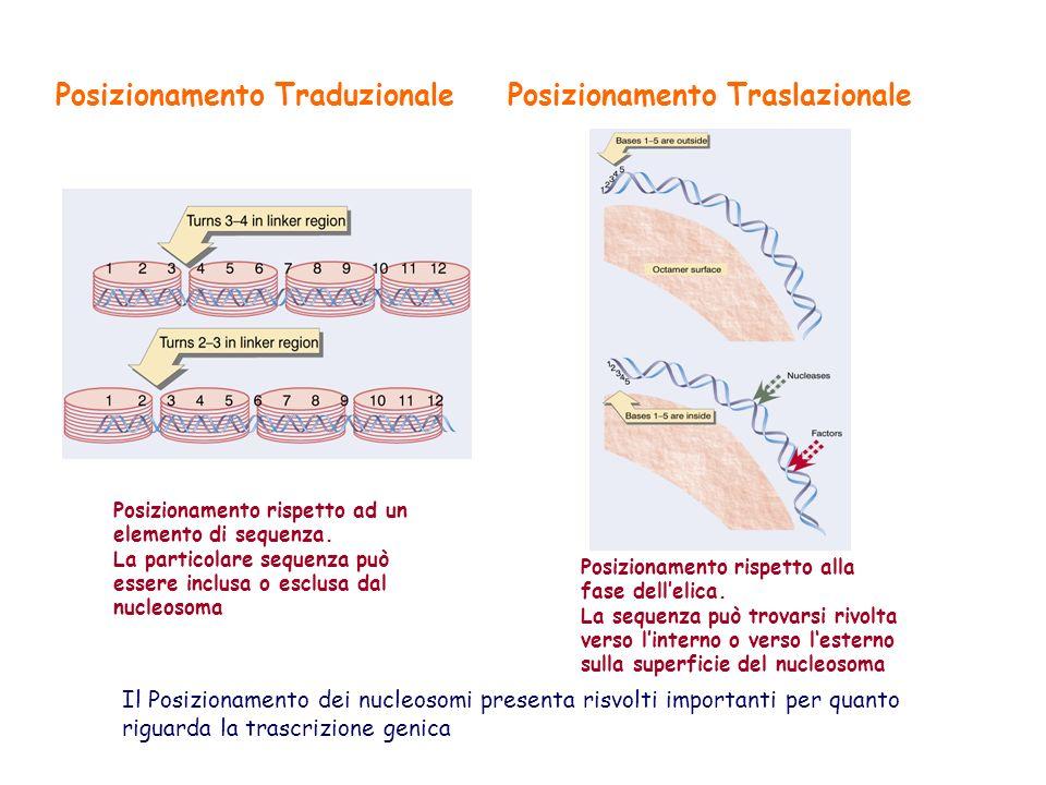 Posizionamento Traduzionale Posizionamento Traslazionale