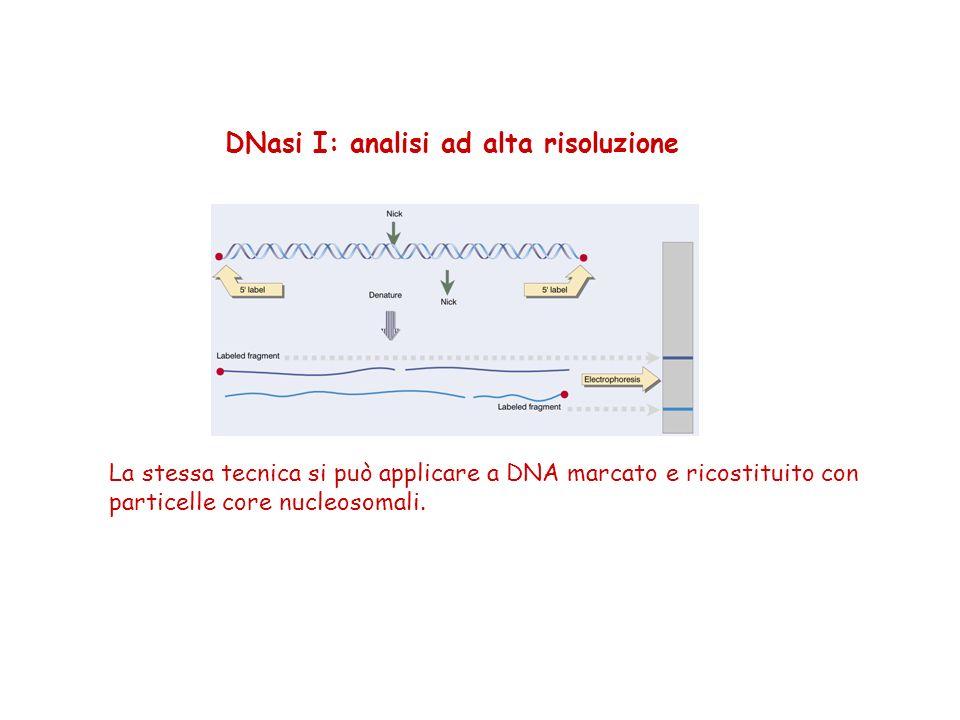DNasi I: analisi ad alta risoluzione