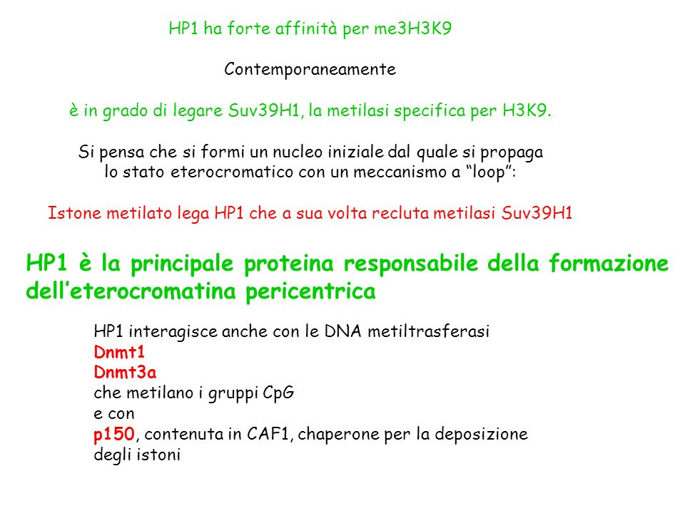 HP1 è la principale proteina responsabile della formazione
