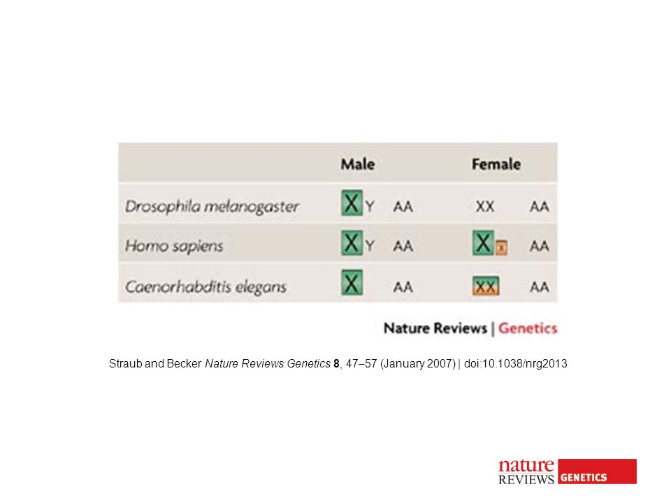 Straub and Becker Nature Reviews Genetics 8, 47–57 (January 2007) | doi:10.1038/nrg2013