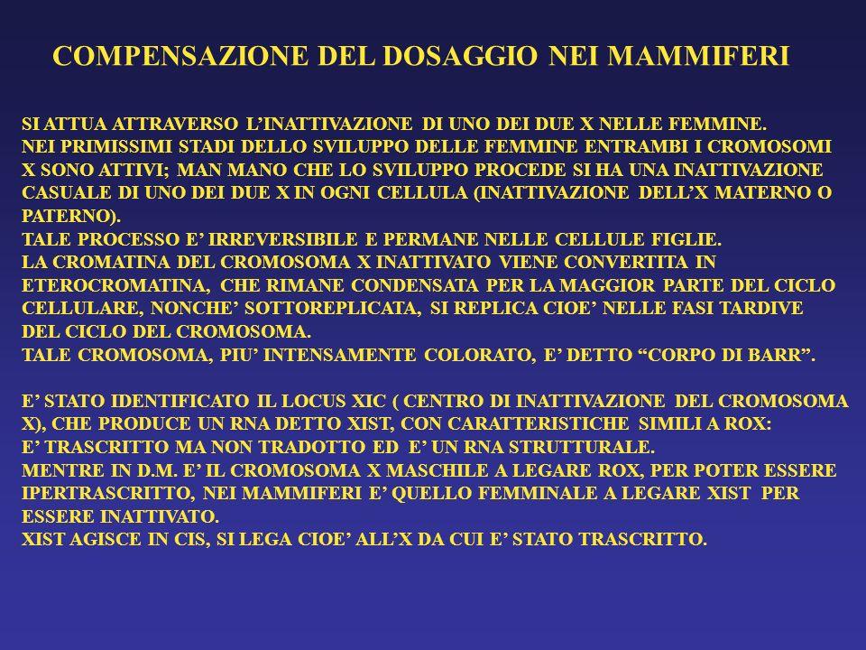 COMPENSAZIONE DEL DOSAGGIO NEI MAMMIFERI