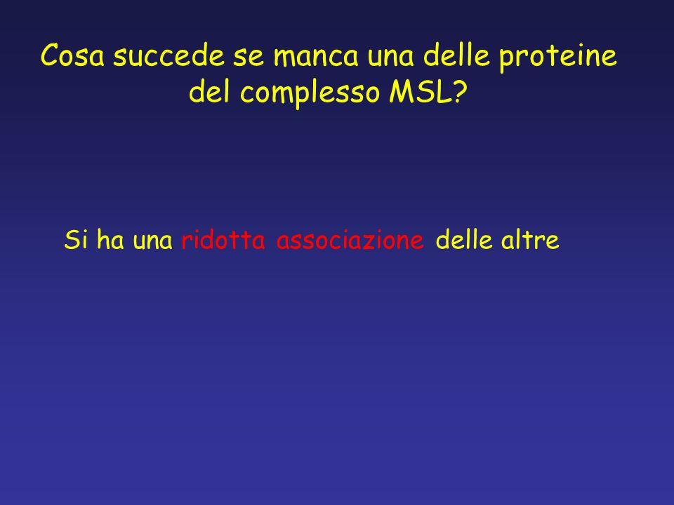 Cosa succede se manca una delle proteine del complesso MSL