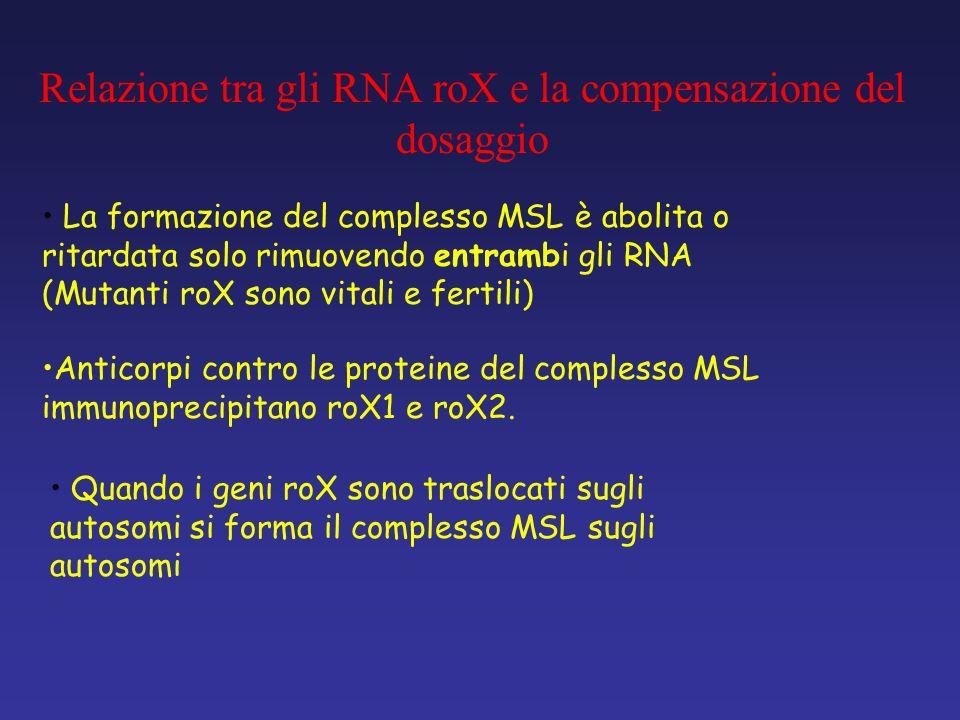 Relazione tra gli RNA roX e la compensazione del dosaggio