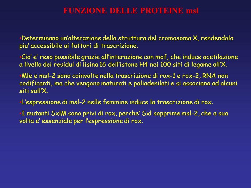 FUNZIONE DELLE PROTEINE msl