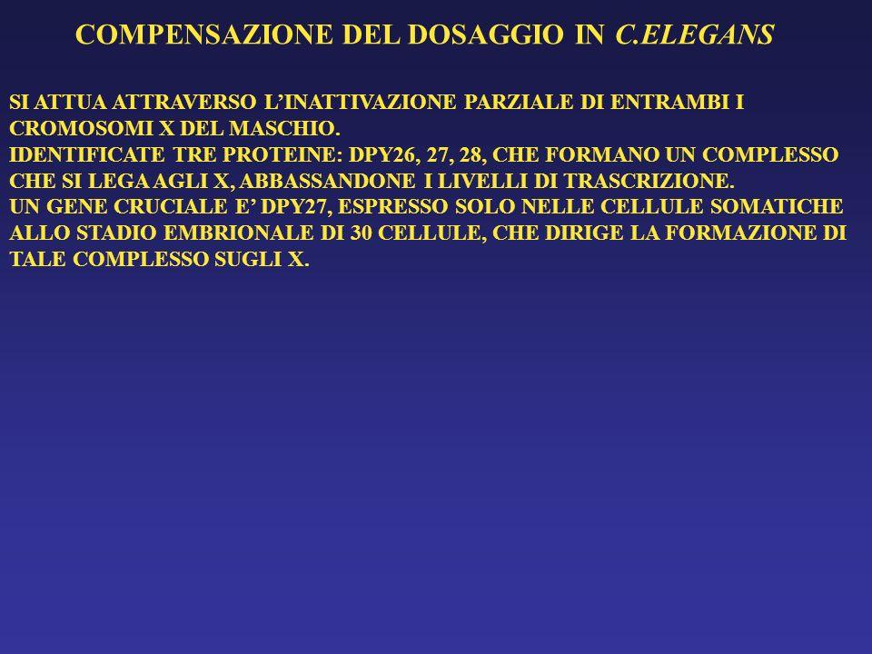 COMPENSAZIONE DEL DOSAGGIO IN C.ELEGANS