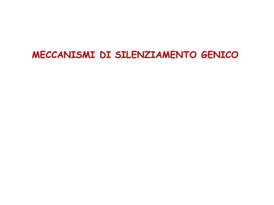 MECCANISMI DI SILENZIAMENTO GENICO