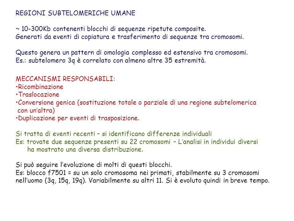 REGIONI SUBTELOMERICHE UMANE