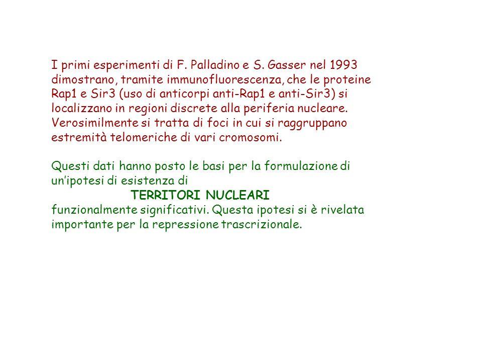 I primi esperimenti di F. Palladino e S. Gasser nel 1993