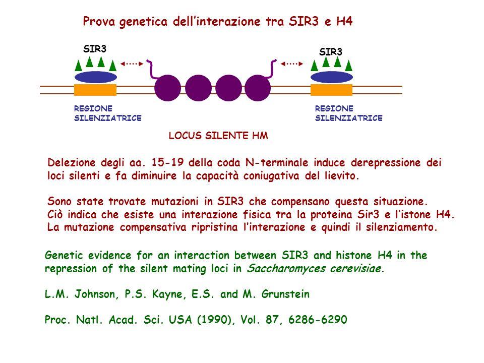 Prova genetica dell'interazione tra SIR3 e H4