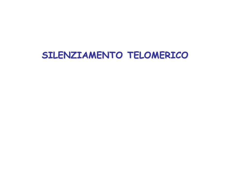 SILENZIAMENTO TELOMERICO