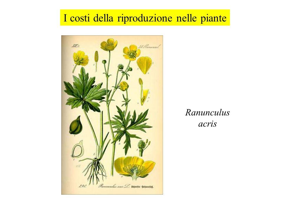 I costi della riproduzione nelle piante