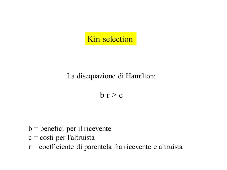 La disequazione di Hamilton: