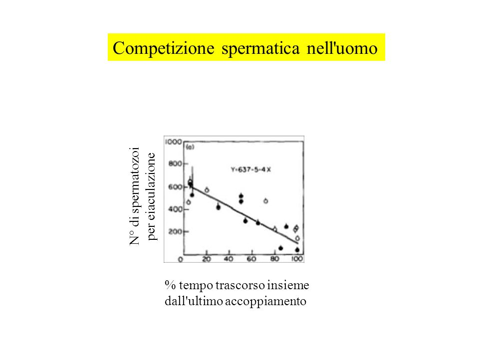 Competizione spermatica nell uomo