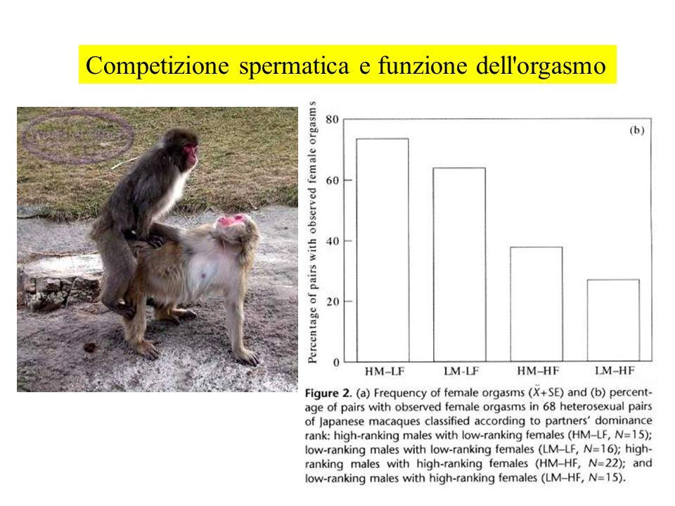 Competizione spermatica e funzione dell orgasmo